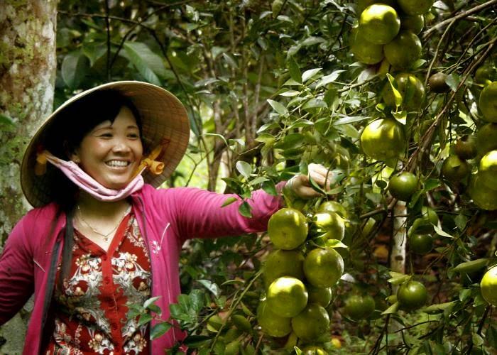 """3Đến Vĩnh Long, bạn sẽ có dịp """"hóa thân"""" thành nông dân tự do khám phá hàng loạt trái cây ngon trong vườn"""
