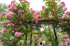 20150523-DS7_0862.jpg (d3_plus) Tags: street bridge sea sky plant flower building nature rose japan garden walking spring scenery outdoor fine wideangle daily architectural bloom  streetphoto   shizuoka    dailyphoto  izu  atami thesedays superwideangle     fineday      tamron1735  a05    tamronspaf1735mmf284dildasphericalif  tamronspaf1735mmf284dildaspherical architecturalstructure d700    nikond700 tamronspaf1735mmf284dild tamronspaf1735mmf284  nikonfxshowcase
