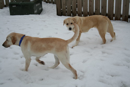 Maggie and Gracie