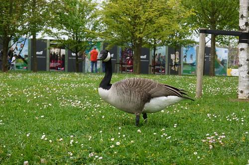 Goose, East Village
