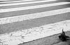 DSC_3305 (adrizufe) Tags: bw nikon dove n paloma bn asfalto bizkaia durango basquecountry atropellada pasocebra durangaldea nikonstunninggallery pinondo d7000 adrizufe