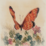 """Butterfly2_16x20_LowRes <a style=""""margin-left:10px; font-size:0.8em;"""" href=""""http://www.flickr.com/photos/35232840@N08/18432266445/"""" target=""""_blank"""">@flickr</a>"""