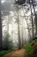 Misty morning (-Alberto_) Tags: fog 35mmfilm redwoods carlzeiss kodakektar yashicataf