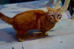 Orange Tabby Cat On the Stairs Wants To Come Inside (Lynn Friedman) Tags: sanfrancisco orange green stairs cat found eyes tabby 94117 lynnfriedman