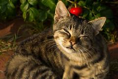 IMG_5825 (Lightcatcher66) Tags: florafauna makros katzencats lightcatcher66