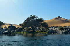 take my waters and grow (chemakayser) Tags: tree azul ro arbol egypt nile contraste desierto egipto aswan nilo