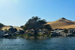 take my waters and grow (chemakayser) Tags: tree azul río arbol egypt nile contraste desierto egipto aswan nilo