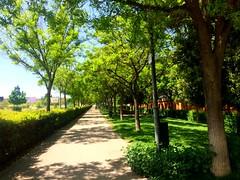 (Stefa_Ramirez7) Tags: madrid espaa cute verde de perfect san kawaii fernando caminar henares comunidad ai caminando tranquilidad