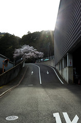 DSC07506 (Ustulo) Tags: japan spring ise iseshi