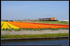 LC-220+50085_Hil_06052016 (Dennis Koster) Tags: v100 lc bollen trein 220 tulpen hillegom locon goederentrein vuiltrein 50085amfnwh