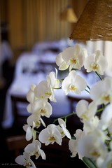 Dining Room Orchids