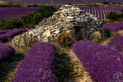 Missing Provence - 18 (BeNowMeHere) Tags: ifttt 500px trip benowmehere colour flowers france landscape lavender missingprovence nature provence summer village color colorful colourful travel