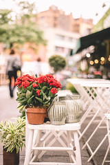 Have a great weekend! (ninasclicks) Tags: flowers newyork travel street bokeh dof plant