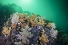 20160803-Eyemouth4 (Dacmirc) Tags: eyemouth diving ukdiving rebreather