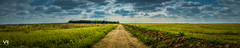 In the field (VR__photography) Tags: nature landscape panorama field road clouds rain serbia woods outdoor grass plant sky