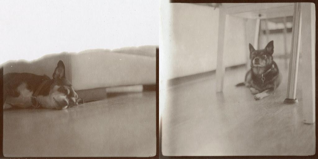 hasselblad polaroid 100 back manual