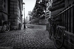 Cambridge Bikes (Tris1972 (tmorphewimages.co.uk)) Tags: cambridge cambridgeshire bikes bicycle monochrome blackwhite bw street dof canon canonef24mmf14ii uk eastanglia buildings architecture cobbles cobblestone railings trinitystreet