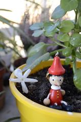 Pinocho (Sonia Ruiz photography) Tags: macetas plantas flores pinocho