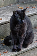 Neighborhood Cat (Bob Gilley) Tags: domestic cat ef70300mm f4556 do is usm canon