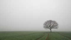 Lone tree (wiscmic) Tags: baum bäume fog nebel strasse street tree trees wald deutschland germany landschaft natur nature foggy landscape mist misty