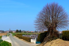 Ici reposent ... (xavnco2) Tags: france tree cemetary albero arbre picardie cimitero somme cimetre beaucampslevieux
