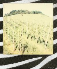 Wahlheimat #  Polaroid_Impossible_Color600_Skins_Edition - SX70 folding ND Filter  - 2015 (irisisopen f/8light) Tags: camera color film analog polaroid sx70 skins 600 land instant edition folding impossible irisisopen