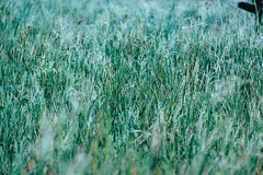 The Hazes (pawl_manchess) Tags: morning bali grass fog tamblingan