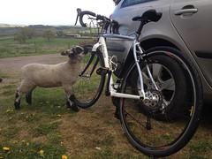 Kofta nibbling at my new bike