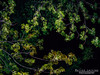 These trees (mlaivii) Tags: light tree beautiful look night amazing sony latvia riga nighr nex