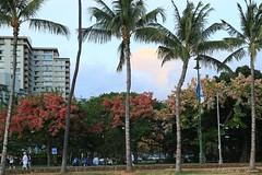 06012015_017_ (ALOHA de HAWAII) Tags: hawaii oahu palmtree rainbowshower waikikisunset