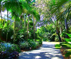 ~Oct 2009 Fairchild Gardens #7~ (endemanf) Tags: miamiflorida fairchildbotanicalgardens tropicallandscapes tropicaljunglegardens