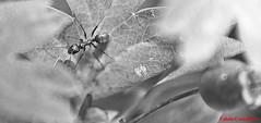 131 (trecentododici) Tags: white black blackwhite ant e nero biano