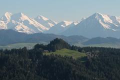 Balmhorn - Altels - Rinderhorn und Niesen der Niesenkette in den Berner Alpen - Alps und im Vordergrund der Stauffen ( BE - 1`141m ) im Berner Emmental im Kanton Bern der Schweiz (chrchr_75) Tags: schweiz switzerland suisse swiss mai christoph svizzera 2016 suissa chrigu chrchr hurni chrchr75 chriguhurni chriguhurnibluemailch mai2016
