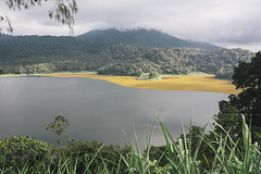 Buyan lake (Marina Nozyer) Tags: bali lake water grass indonesia bedugul buyan