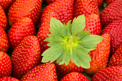 Strawberries (CarlaBrito) Tags: macro fruits fruit canon spring healthy strawberry strawberries fresh health macrophotography