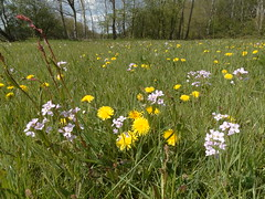 (AbAberson) Tags: spring lente drenthe weerwille