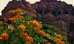Indien, Bougainvillea am Vishnu-Tempel bei Gwalior, 13637/6600 (roba66) Tags: plants flores flower color colour macro fleur closeup temple flora vishnu blossom flor pflanzen blumen colores blume makro farbe tempel bloem blten flori bugambilia coleur roba66