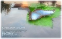 Verdronken vlinder... (H. Bos) Tags: butterfly poem vlinder lied boudewijndegroot verdronkenvlinder lennaertnijgh