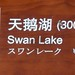 2016_04_11 208 - Swan Lake