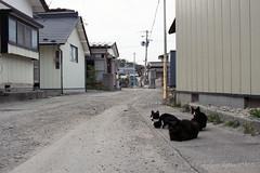 20160424-31 (GenJapan1986) Tags: film animal japan cat island  miyagi   2016     nikonnewfm2   fujifilmfujicolorsuperiapremium400  sabusawajima