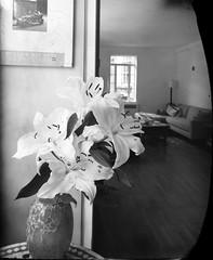 Lilies (triebensee) Tags: new blackandwhite polaroid iii large super instant epson 4x5 linhof format 55 90mm f8 schneider kreuznach technika v700 angulon new55pn
