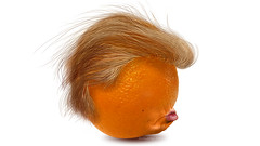 #TheBigOrangeHead in profile (DonkeyHotey) Tags: face photomanipulation photoshop photo election political politics cartoon manipulation politician donaldtrump republican campaign primary gop rnc commentary generalelection 2016 johnmiller politicalcommentary donkeyhotey thebigorangehead