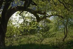 Shady branches (GDDigitalArt) Tags: nature sunshine rural scotland daylight outdoor hiking benlomond lochlomond