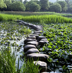 stones (romani.stefano10) Tags: china city travel lake green art nature colors beautiful geotagged photo foto photographer photos live sony ngc natura national hangzhou oriental paesaggi geographic photograpy a6000