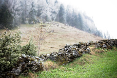The old Wall (memories-in-motion) Tags: white mountain tree green nature stone wall zeiss canon landscape photography outdoor stones border natur meadow wiese line berge stein bume mauer fichten flur distagon grenze waldrand 5dmarkiii zeissdistagont1435ze