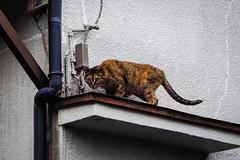 Today's Cat@2016-07-14 (masatsu) Tags: cat pentax catspotting mx1 thebiggestgroupwithonlycats