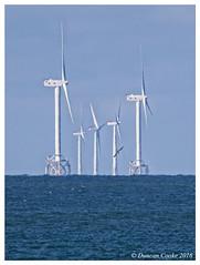 DS0D1706-Wind-farm-and-Gannet (duncancooke.happydayz) Tags: gannet turbines walney irish sea birds coast wind farm birdperfect distinguishedbirds telephoto cumbria cumbrian