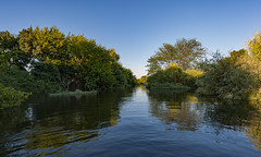 An Unexpected Paradise (Frags of Life) Tags: bioreserve tagus riotejo tejo escaroupim ribatejo nature water channel horizontal colour green outdoor day trees plants river boat idylic portugal calm reflection navigate wildlife