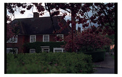 An English Streetscape, with pink blossoms, it must have been spring (Melanie Jayne Art) Tags: streetscape london spring blossoms hedges house brick film dust memory time 35mm photography contemporary
