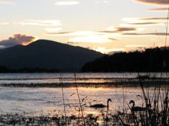 Balmaha Swans (SweetDisposition95) Tags: balmaha scotland loch lomond sun sunset sky orange colours water swans birds silhouette